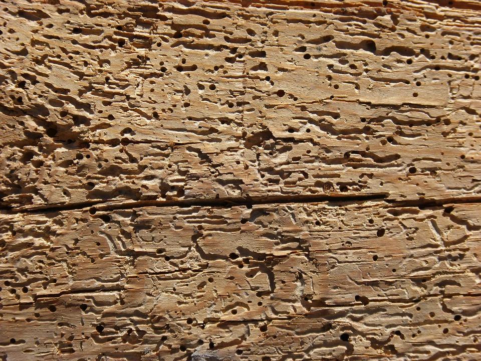 Es posible eliminar la carcoma - Como eliminar la carcoma de la madera ...